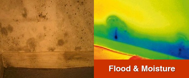 Flood and Moisture Assessment London