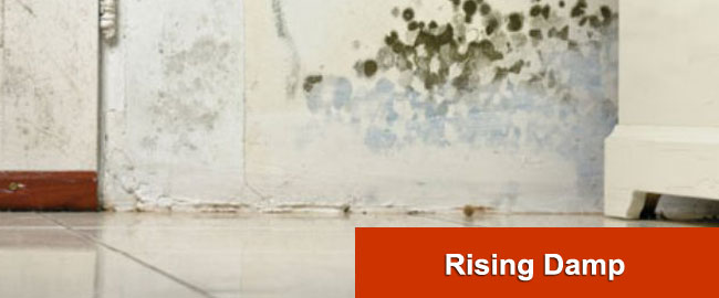 Rising Damp London