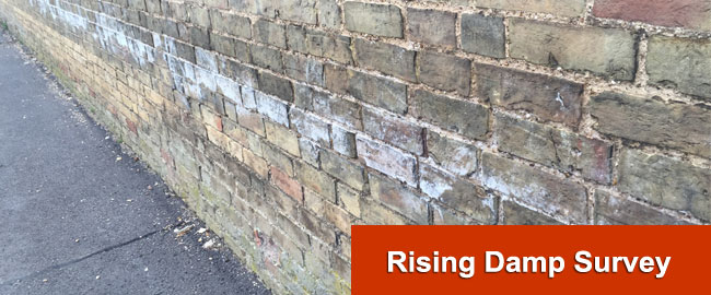 Rising Damp Surveys London