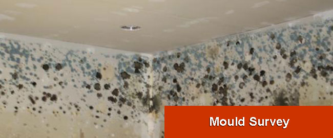 Mould Survey